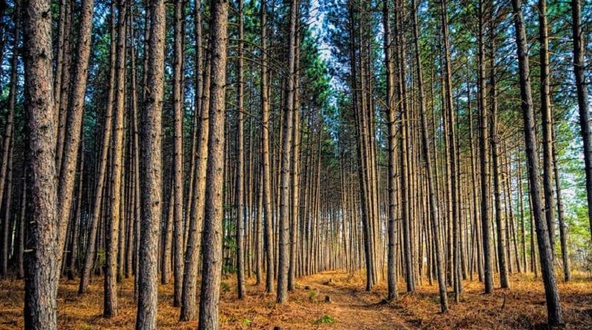 deforestación provocada por la mano del hombre aumenta la temperatura del planeta