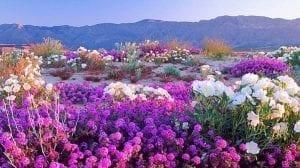 Desierto lleno de flores