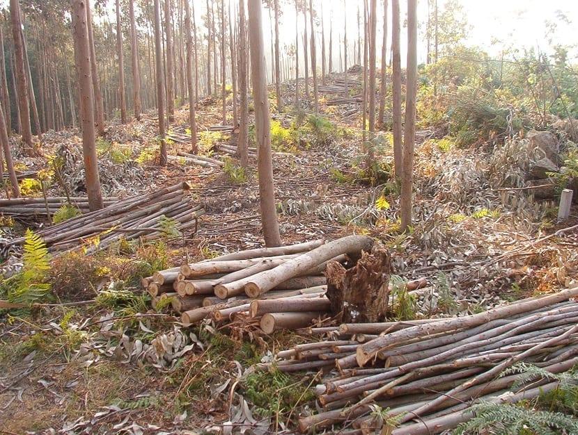 masas forestales y tala de árboles