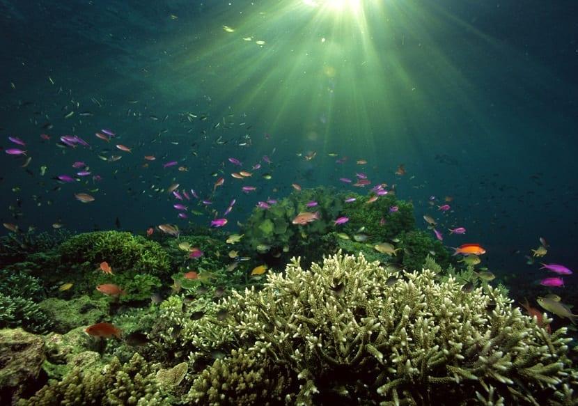 la fotosíntesis en mares y oceanos está disminuyendo por el cambio climático