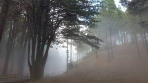 la humedad de los bosques en las mañanas