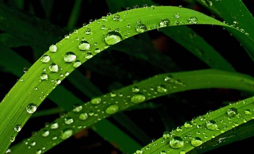 humedad acumulada en las plantas