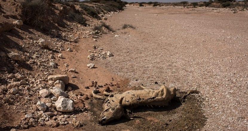 sequía que azota a somalia