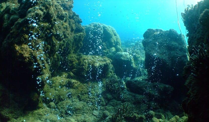 acidificacion de oceanos provocado por el cambio climático