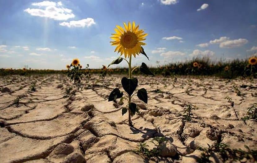 Las sequías provocadas por el cambio climático dificultan la agricultura
