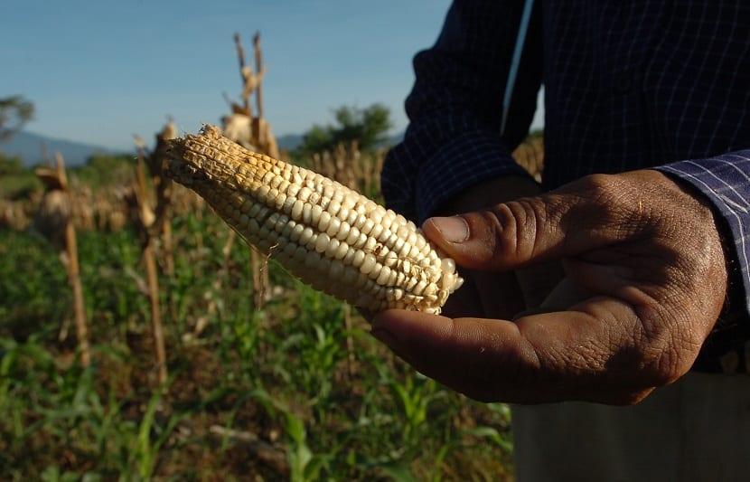 En América Latina sufrirá la agricultura a causa del cambio climático
