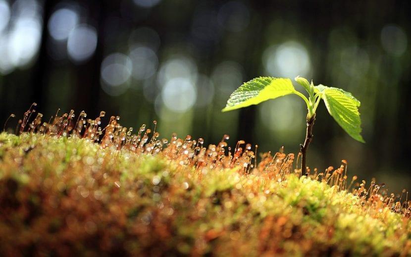 Árbol recién germinado