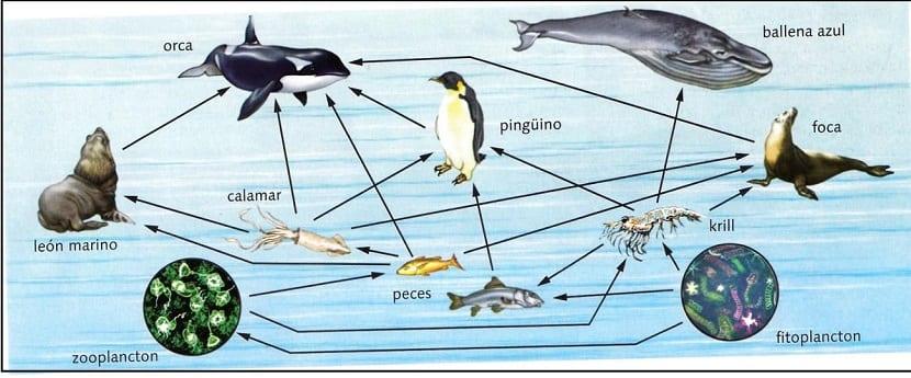 cadena trofica marina afectada por el cambio climático