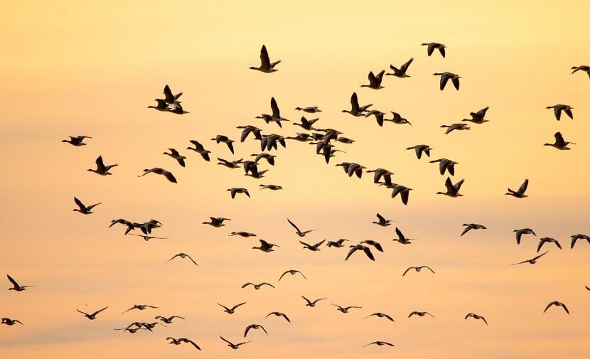 cambio climático y aves migratorias