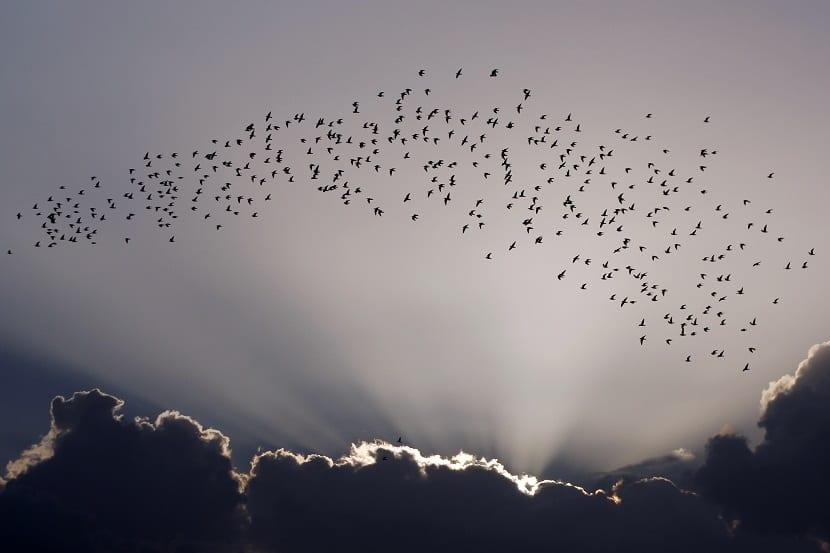 cambio climatico y migracion