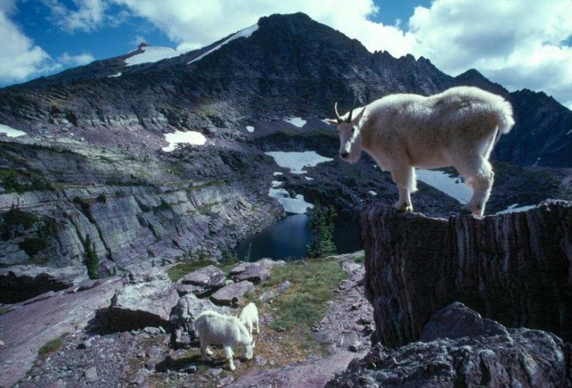 Glaciares de Montana