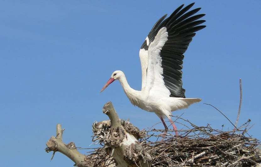 nidacion de las aves migratorias