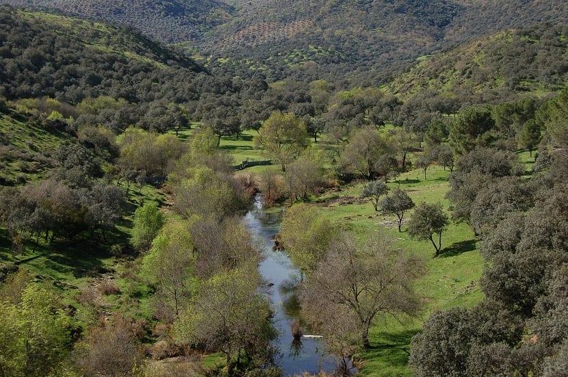 el bosque mediterráneo se convertirá en un matorral en 100 años