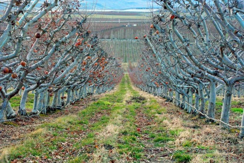 Árboles cultivados