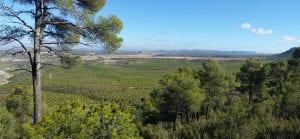 el bosque mediterráneo es más vulnerable al cambio climático