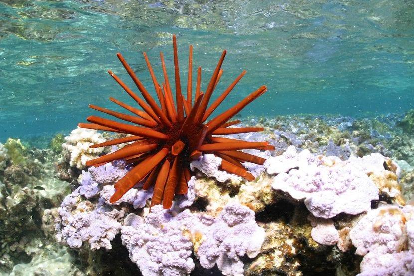 Corales de Hawái