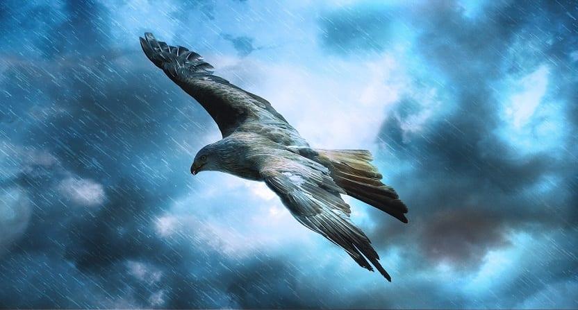 pájaro en el cielo con lluvia