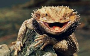 la flora bacteriana de los reptiles es afectada por el cambio climático