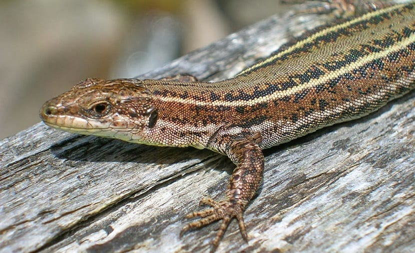 reptiles y cambio climático