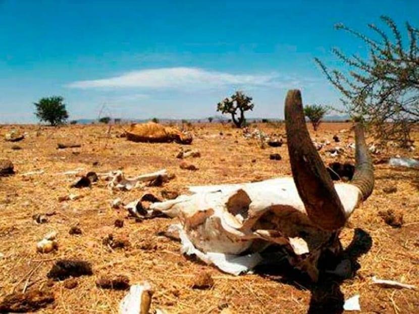 las sequías dañan el ecosistema