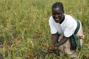 Agricultura en Uganda