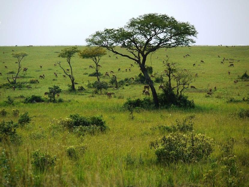 Árboles en Uganda