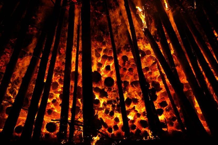 Incendio forestal, una de las consecuencias de la ola de calor
