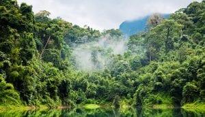 disminuye las precipitaciones en el amazonas