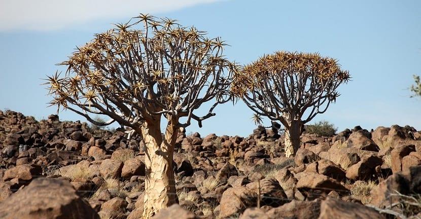 sequia africa foto namibia