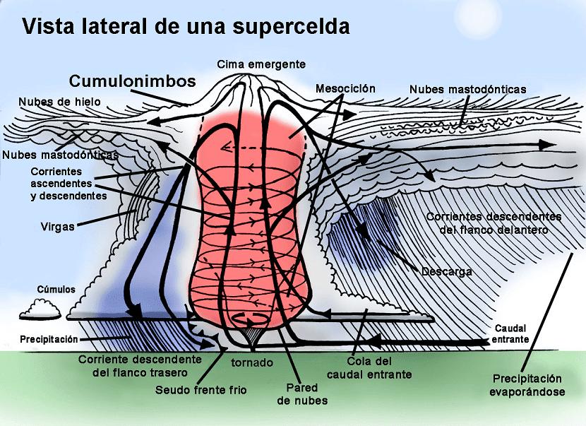partes mesociclon
