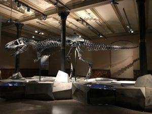 fosil de tiranosaurus