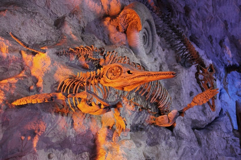 fósiles varios tipos