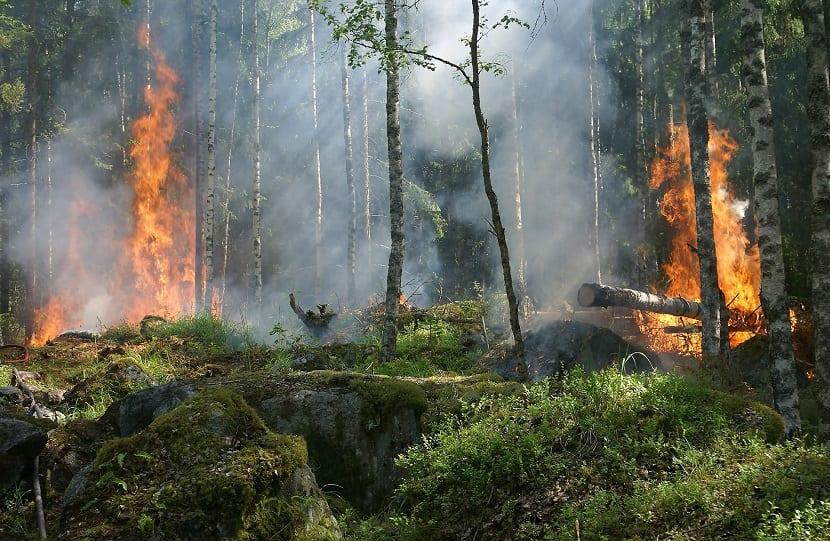 incendio bosques quemándose