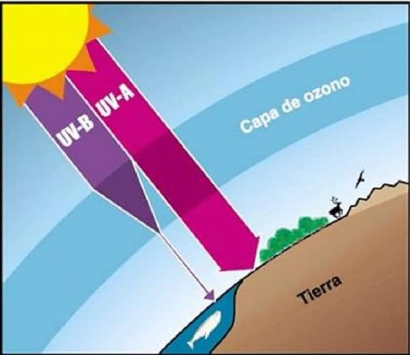 el ozono filtra la radiación UV del sol