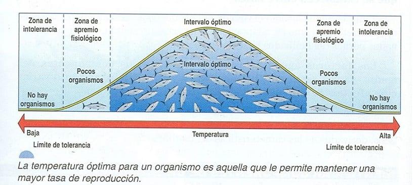 temperatura óptima peces