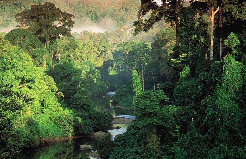 biodiversidad de bosques