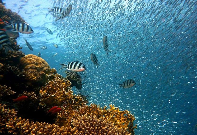 coral corales especies marinas