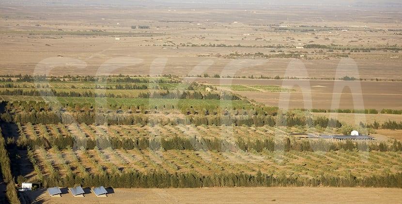 Sekem agricultura campos