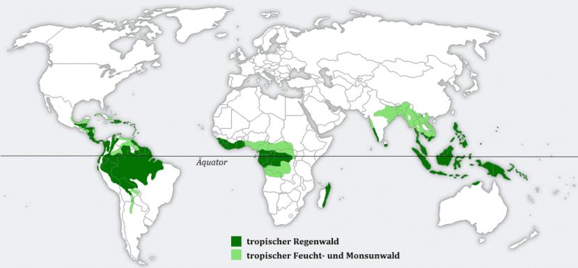 Localización de las selvas tropicales