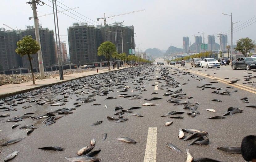 peces muertos animales caen del cielo