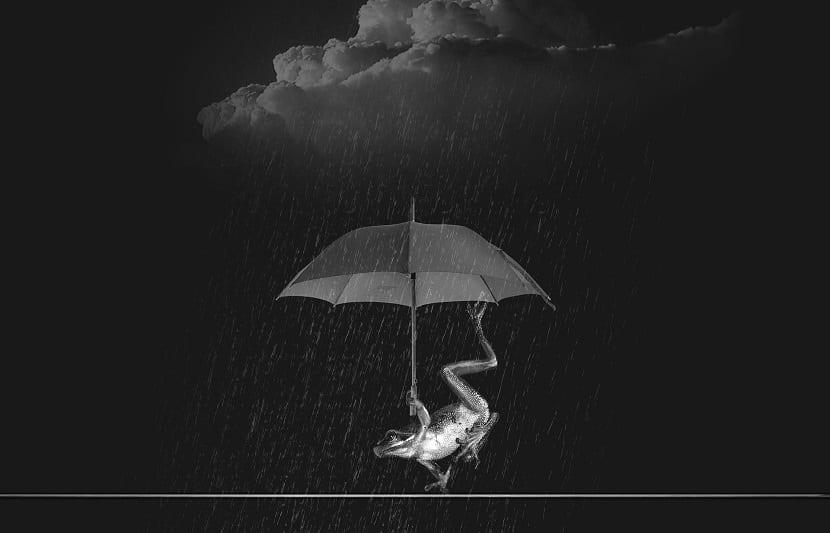 rana lluvia con paraguas