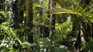 Selva del Amazonas árboles flora