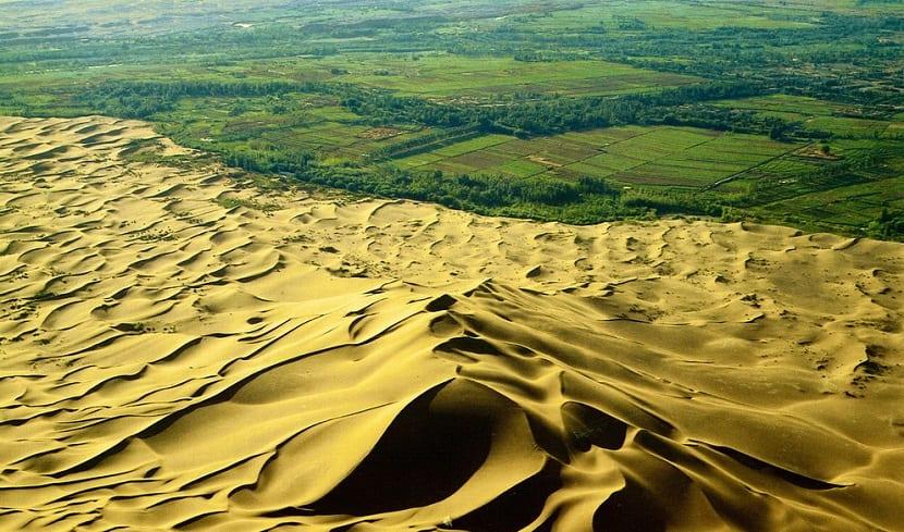 desierto y bosque sahara África