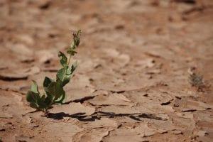 españa vulnerable ante el cambio climático