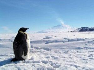 pinguino antartida volcan activo