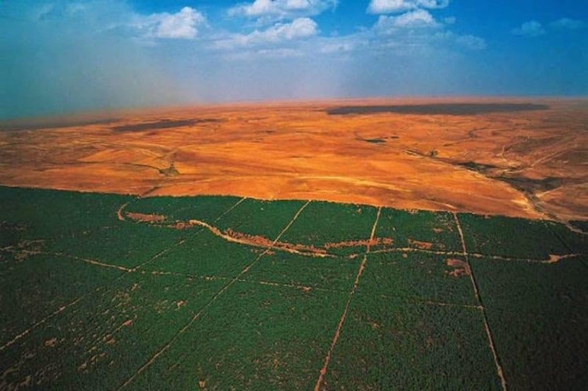 muralla verde en el Sáhara
