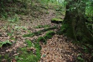 suelos boscosos