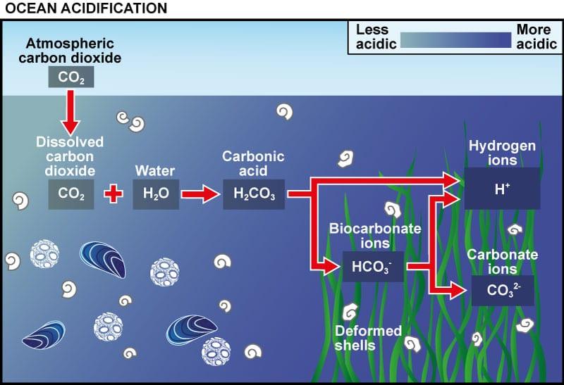 Ilustración que muestra cómo se acidifican los mares