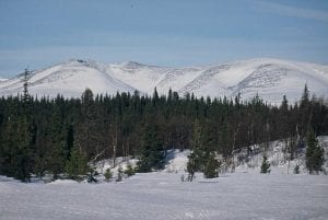 bosques boreales nevados