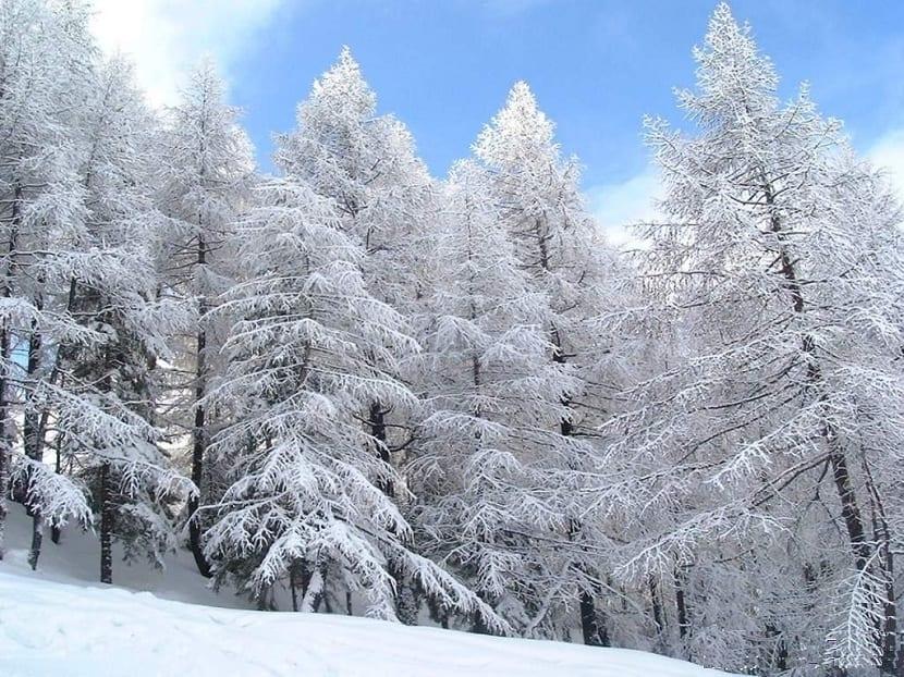 bosques de eurasia